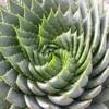Natures elegant ratio